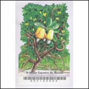 B-141 - 2006 - O Maior Cajueiro do Mundo. Fruta. Agricultura.