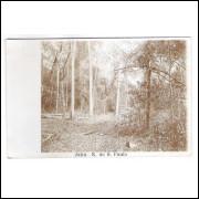 JH01 - Postal circulado em 1911, Jahu - São Paulo, mata floresta.