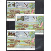 max103AB - 1984 Búfalos de Marajó: Murrah, Carabao e Mediterrâneo. Fauna.
