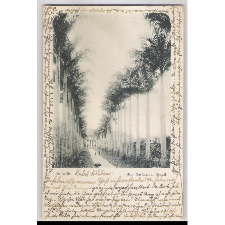 joi21 - Postal antigo - Joinville - SC. Rua com palmeiras.