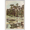 fo01 - Cartão postal antigo, Carnaubeiras. Fortaleza. Agricultura.