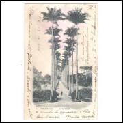 Postal A.Ribeiro Rio de Janeiro circulado 1904 Jardim Botânico.